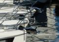 leasing nautico Confindustria Nautica Assilea
